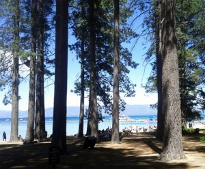 Lake Tahoe Seen Through Trees 2012