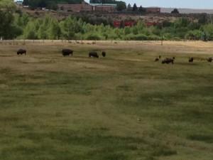 Mission Trip Buffalo
