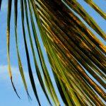 palms swiv flickr