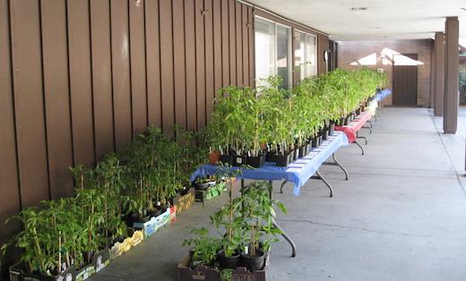 Plant Sale Photo